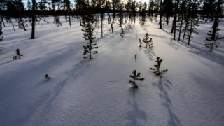 Shadows from Trees, Lapland, Finland. Copyright Dave Walsh 2005