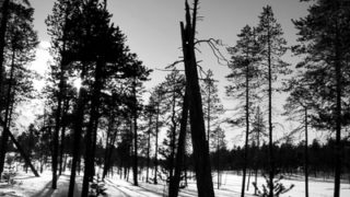 Shadows from Trees, Lapland, Finland &cop; Dave Walsh 2005