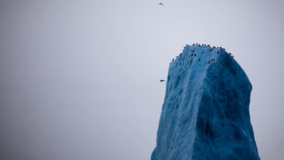 Birds on the peak of an iceberg, Baffin Bay, off West Greenland