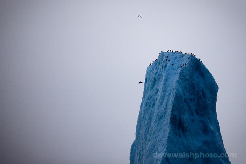 Birds on the peak of an iceberg, Baffin Bay, off West Greenland