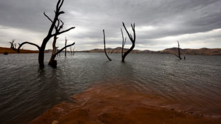 Dead trees in Lake Hume, Victoria .