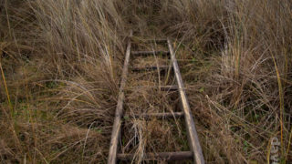 Ladder in the grass, bull island