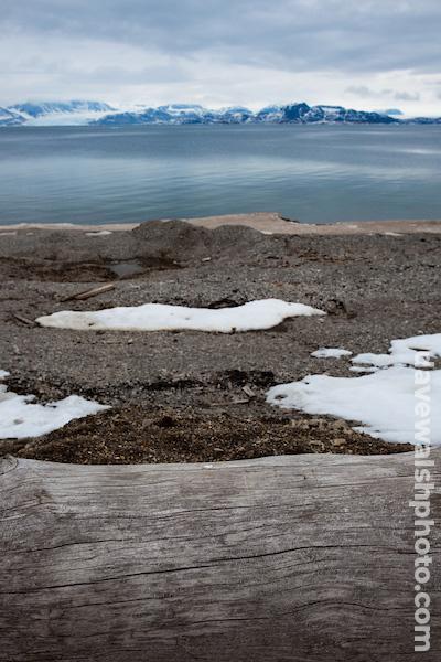 Siberian driftwood, Ny-Alesund