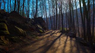 Winter forest path, Montseny, Catalonia