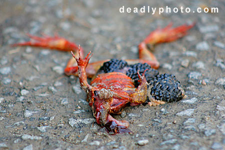 Dead Frogs. Copyright 2005 Dave Walsh