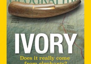 Ivory - does it really come from elephants?