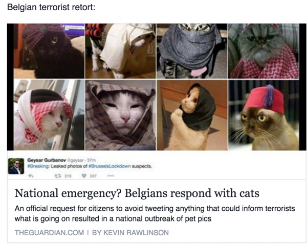 Guardian Brussels Lockdown Cat Meme
